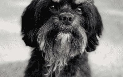 Ik wil een puppy kopen!