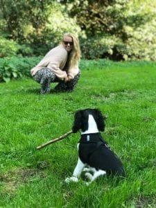 Dogtalk hondenschool hondentraining hond puppy puppycursus puppytraining